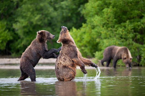 nikolai-zinoviev-bear-10-back-scratch